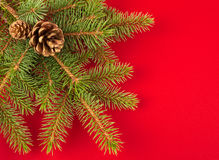 Christmas tree with red space Stock Photo