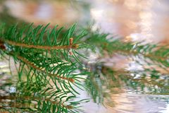 Christmas tree with reflection. Branch of Christmas tree with reflection Stock Photography