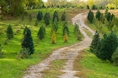 Christmas tree road Stock Photography
