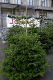 CHRISTMAS TREE ON SALE Stock Image
