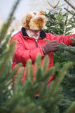 Christmas Tree Shopping Stock Image