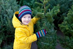 Christmas tree shopping Royalty Free Stock Images