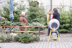 Christmas tree shopping Royalty Free Stock Photos