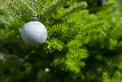 Christmas tree. Single silver ornament hanging on a Christmas tree Stock Images