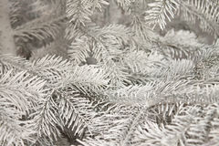 Christmas tree on snow. Winter background for your design Royalty Free Stock Photos