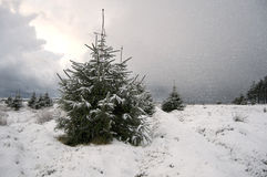 Christmas tree in the snow Stock Images