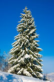 Christmas Tree with Snow Stock Photo