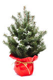 Christmas tree with snow Royalty Free Stock Photo