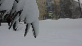Christmas tree in the snow on background of a winter crossing. With people going on a ski trip stock video