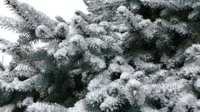 Christmas tree in the snow. Snow falls on the tree stock video