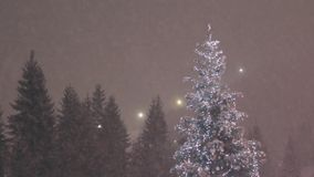 Christmas tree and snow falling in a forest. Christmas tree and falling snow on a background of falling snow and the winter forest stock footage