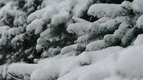 Christmas tree in the snow. Snow falls on the tree stock footage