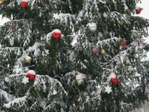 Christmas tree in the snow stock image