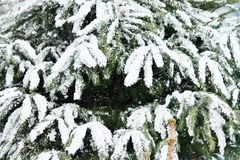 Christmas tree with snow Stock Images