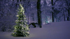 Christmas Tree in Snow. At night stock footage