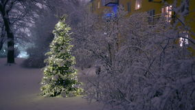 Christmas Tree in Snow. At night stock video