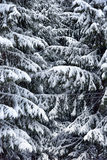 Christmas tree in the snow Royalty Free Stock Photography