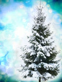 Christmas tree in snow Royalty Free Stock Image