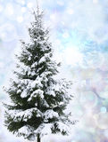 Christmas tree in snow Royalty Free Stock Photography