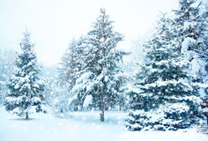 Christmas tree in snow Stock Photos