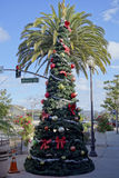 Christmas tree in SoCal. Christmas tree in front of King palm, distinctive Southern California holiday street in city of Camarillo Stock Photos