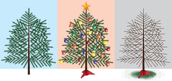 Christmas Tree stages Stock Photography