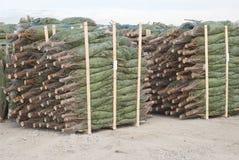 Christmas Tree Storage Stock Images