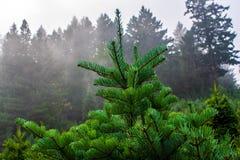 Christmas tree top stock photo