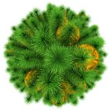 Christmas tree - top view - decorated with golden Christmas ball. S - isolated on white - 3d rendering Stock Image