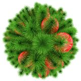 Christmas tree - top view - decorated with red Christmas balls -. Isolated on white - 3d rendering Royalty Free Stock Photo