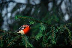 Christmas tree toy bullfinch. Stock Photos