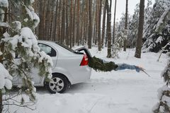 Christmas tree transportation in the car trunk. Christmas fir from forest covered snow. Photo stock photos