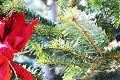Christmas tree in Treviso, Italy, close up Royalty Free Stock Photos