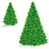 Christmas tree of two sizes. Isolated on white, live green color, without baubles Royalty Free Stock Images