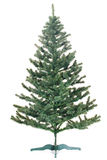 Christmas tree undecorated Royalty Free Stock Photography