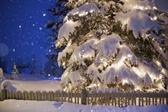 Christmas Tree Under Snow Stock Photo