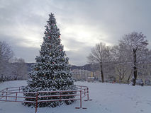 Christmas tree under snow, winter holidays. Christmas tree covered with snow, winter morning in a city park, Sochi, Russia Royalty Free Stock Photos