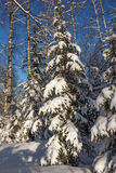 A Christmas tree under the snow. Winter. Russia royalty free stock photos