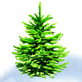 Christmas tree. Watercolor painting on white background Stock Images