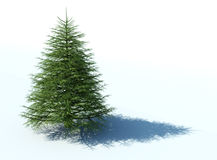 Christmas tree on white background Stock Photography