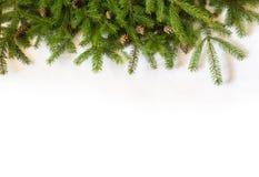 Christmas tree on white background Royalty Free Stock Image