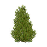 Christmas tree on white background. Realistic figure Royalty Free Stock Photos