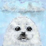 White fur seal. S on ice background Stock Image