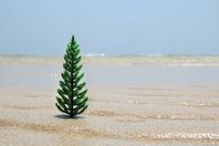 Christmas tree on the white sand beach on the background of blue sky. Christmas tree on the white sand beach on the background of blue sky, with copy space Royalty Free Stock Images
