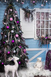 Christmas tree on winter country yard of wooden house. Christmas tree on winter country yard of blue wooden house Stock Images