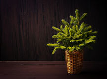 Christmas tree on winter wooden retro background Royalty Free Stock Photography