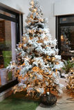 The  Christmas tree. A wonderful Christmas tree with its magical lights Royalty Free Stock Image