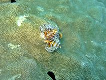 Free Christmas Tree Worm Stock Images - 356314