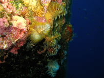 Christmas Tree Worms Stock Images