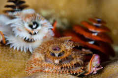 Free Christmas Tree Worms Stock Images - 73876174